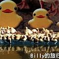 黃色小鴨桃園009.jpg