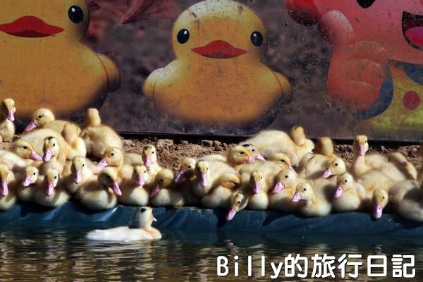 黃色小鴨桃園010.jpg