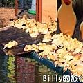 黃色小鴨桃園008.jpg