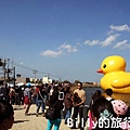 黃色小鴨桃園029.jpg