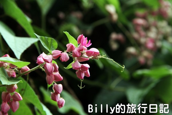 高雄旗津-旗後砲台002.jpg