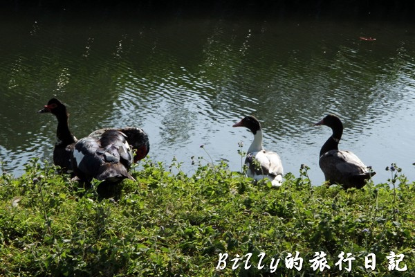 豐之谷自然生態公園 - 花蓮理想大地渡假飯店002.jpg