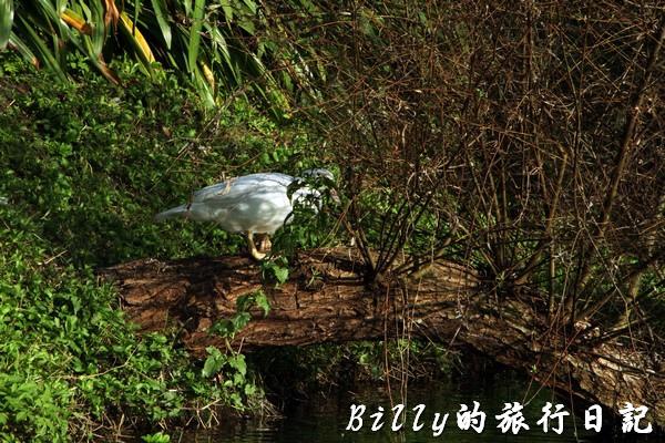 豐之谷自然生態公園 - 花蓮理想大地渡假飯店020.jpg