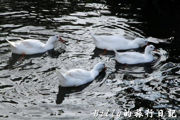 豐之谷自然生態公園 - 花蓮理想大地渡假飯店027.jpg