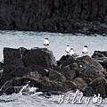 澎湖旅遊 - 晶翔號沙港東海漁夫體驗026.jpg