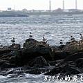 澎湖旅遊 - 晶翔號沙港東海漁夫體驗027.jpg