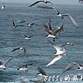 澎湖旅遊 - 晶翔號沙港東海漁夫體驗030.jpg