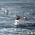 澎湖旅遊 - 晶翔號沙港東海漁夫體驗032.jpg