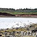 澎湖旅遊 - 晶翔號沙港東海漁夫體驗062.jpg