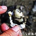 澎湖旅遊 - 晶翔號沙港東海漁夫體驗069.jpg