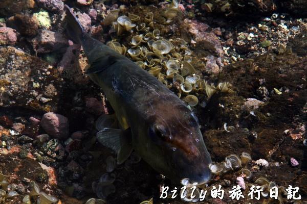 澎湖旅遊 - 晶翔號沙港東海漁夫體驗074.jpg