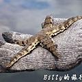 澎湖旅遊 - 晶翔號沙港東海漁夫體驗077.jpg