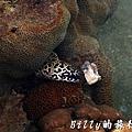 澎湖旅遊 - 晶翔號沙港東海漁夫體驗076.jpg