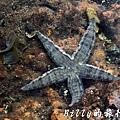澎湖旅遊 - 晶翔號沙港東海漁夫體驗078.jpg