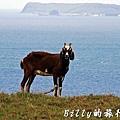澎湖七美島032.jpg