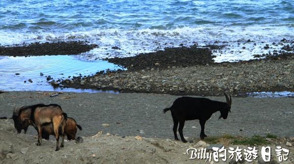 蘭嶼旅遊-自由自在的山羊001.jpg