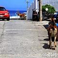 蘭嶼旅遊-自由自在的山羊007.jpg