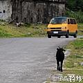 蘭嶼旅遊-自由自在的山羊012.jpg