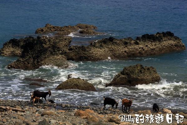 蘭嶼旅遊-自由自在的山羊019.jpg
