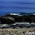 蘭嶼旅遊-自由自在的山羊022.jpg