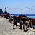 蘭嶼旅遊-自由自在的山羊026.jpg