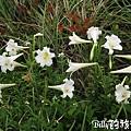 基隆旅遊-北方三島(彭佳嶼)013