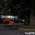 莒光四村 - 蚊子電影院·烤山豬004.jpg