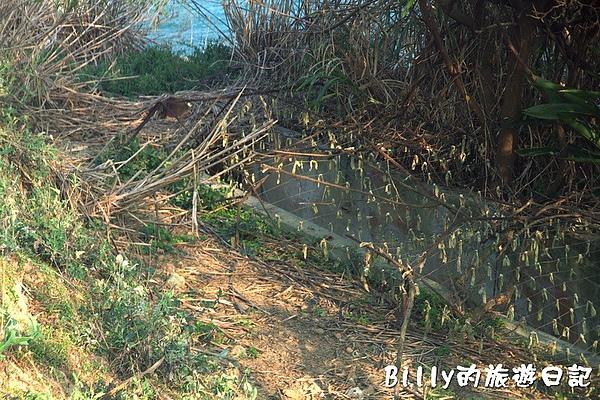 馬祖北竿大坵島157.jpg