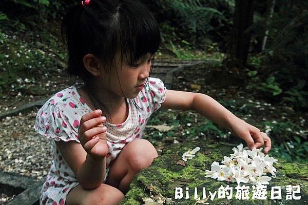 2011七堵桐花031.JPG