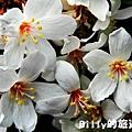 月眉山桐花15.JPG