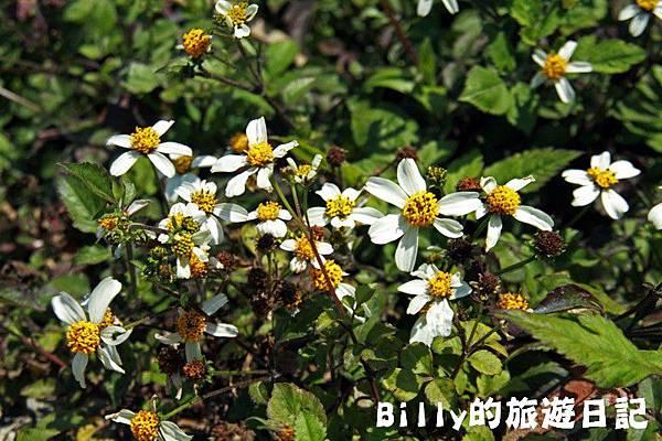 馬祖東莒-桃花30.JPG