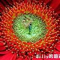 花卉圖片05.JPG