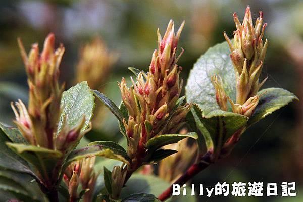 花卉圖片28.JPG