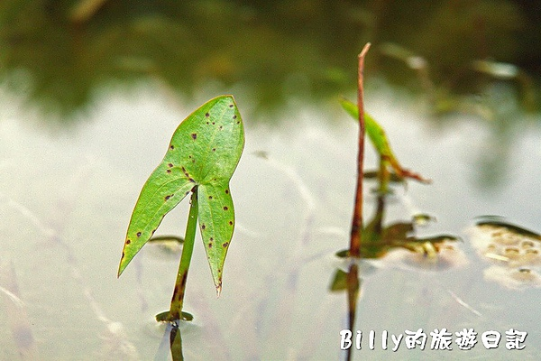 台北市植物園24.jpg
