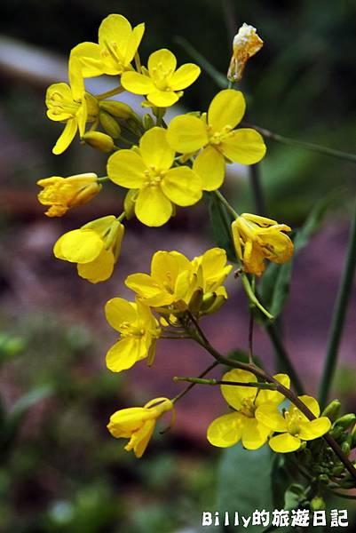 花卉圖片02.JPG