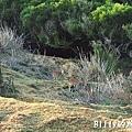 馬祖北竿大坵島055.jpg