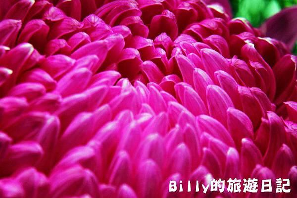 花卉圖片13.JPG