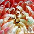 花卉圖片21.JPG