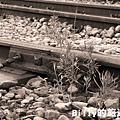 基隆火車站22.JPG