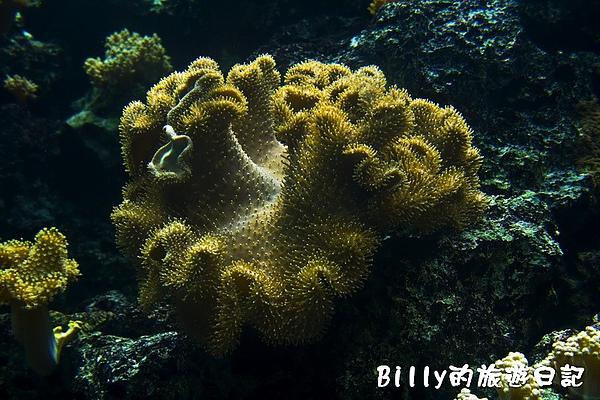 國立海洋生物博物館009.jpg