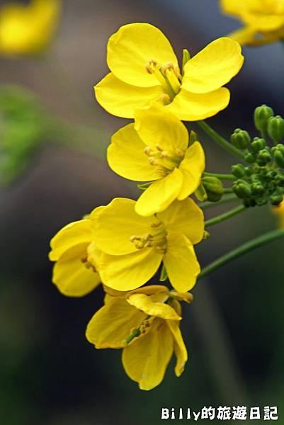 花卉圖片01.JPG