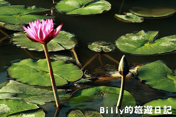 七堵苓蘭荷花池20.JPG