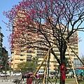 鐵道公園百年櫻花樹06.jpg