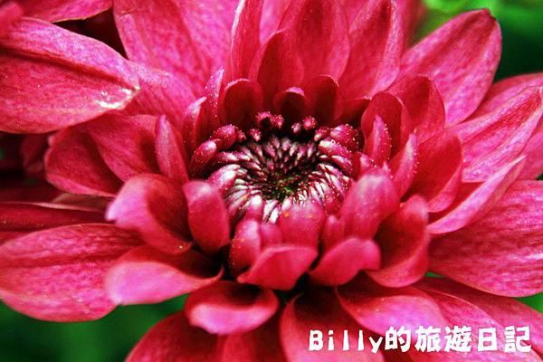 花卉圖片10.JPG
