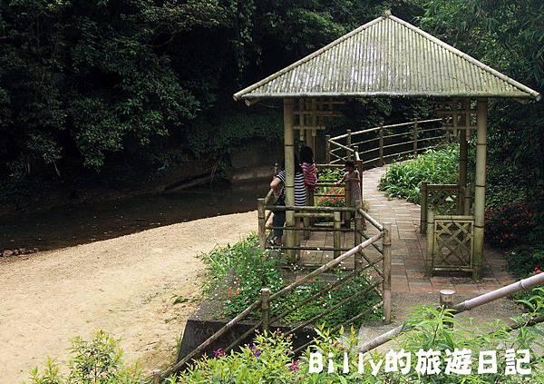 2011七堵桐花001.JPG