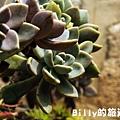 花卉圖片17.JPG