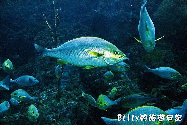 國立海洋生物博物館022.jpg