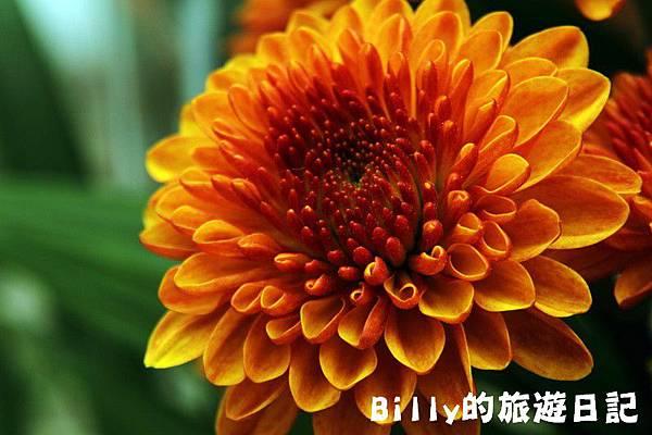 花卉圖片09.JPG