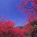 陽明山13.jpg