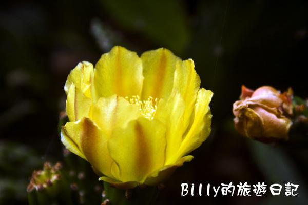 仙人掌花.jpg